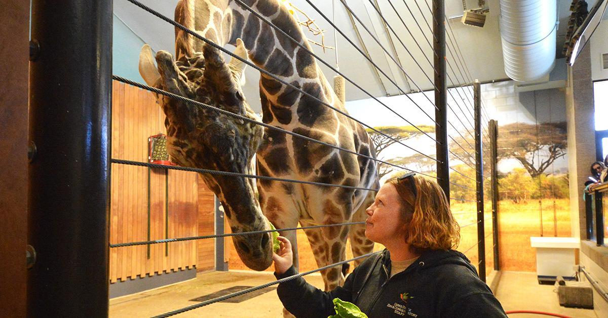 Jill feeds lettuce to Skeeter the giraffe.